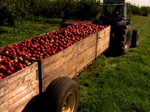a tractor moves apple crates in the field - crate stock videos & royalty-free footage