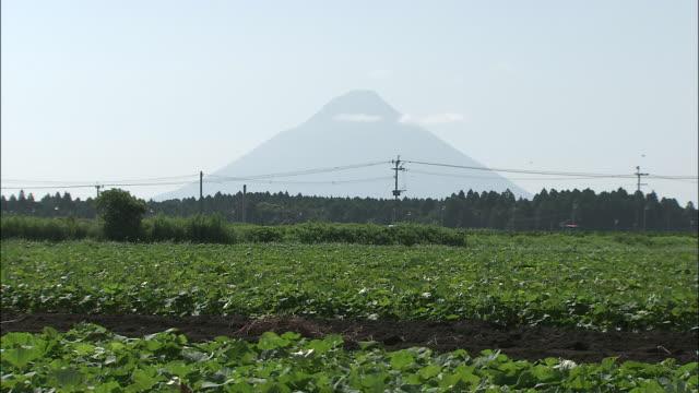 vídeos de stock, filmes e b-roll de a tractor moves through sweet potato fields. - prefeitura de fukuoka