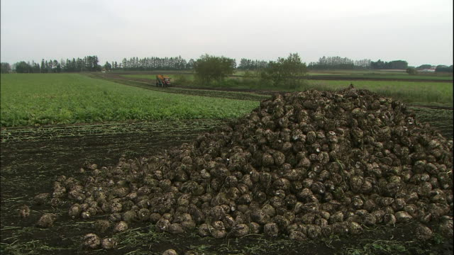 a tractor moves toward a pile of harvested beets in a field in hokkaido, japan. - 農作業点の映像素材/bロール