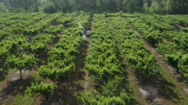 WS AERIAL POV Tractor moving in Pearson Farm / Fort Valley, Georgia, United States