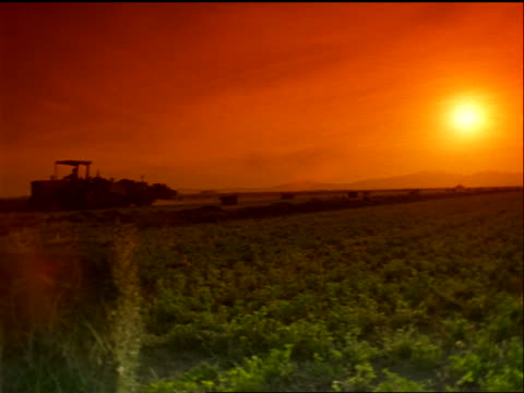tractor moving slowly in alfalfa field / orange filter - alfalfa hay stock videos & royalty-free footage