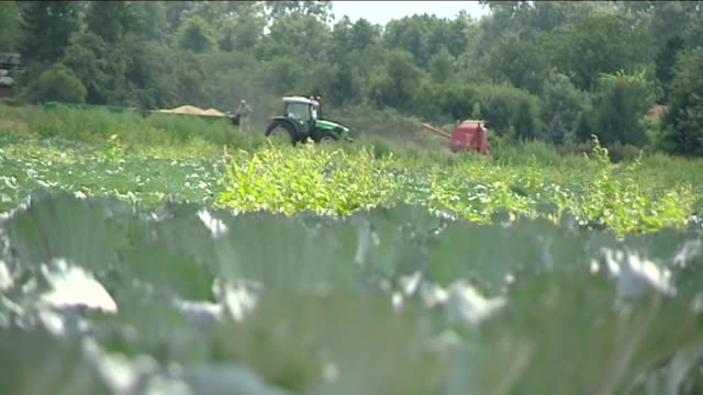 tractor on cabbage field - crucifers stock videos & royalty-free footage