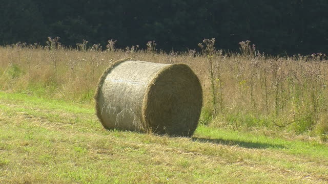 vidéos et rushes de ms tractor picking up bales of straw from field / saarburg, rhineland palatinate, germany - soulever