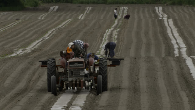 "tractor plants crops, japan. - ""bbc natural history"" video stock e b–roll"