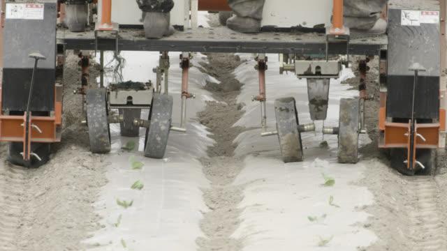 tractor plants crops, japan. - menschliche gliedmaßen stock-videos und b-roll-filmmaterial
