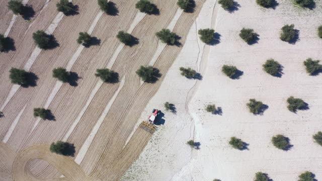 vídeos y material grabado en eventos de stock de tractor plowing a field of olive trees seen from a drone in the province of toledo, autonomous community of castilla la mancha, spain, europe - tractor
