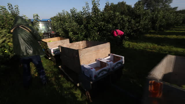 tractor pulling trailer with bramley apples during a harvest in coxheath, kent, u.k., on thursday, september 16, 2021. - apple fruit stock videos & royalty-free footage