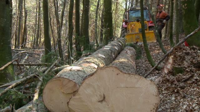hd: tractor pulling tree trunks - metalltråd bildbanksvideor och videomaterial från bakom kulisserna