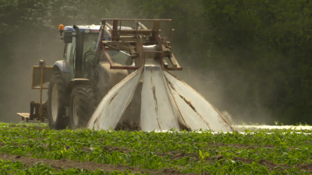 stockvideo's en b-roll-footage met tractor removes plastic cloche from sweetcorn seedlings, uk - cereal plant