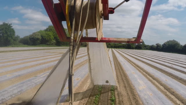 pov tractor removes plastic from sweetcorn seedlings, uk - west sussex stock videos & royalty-free footage