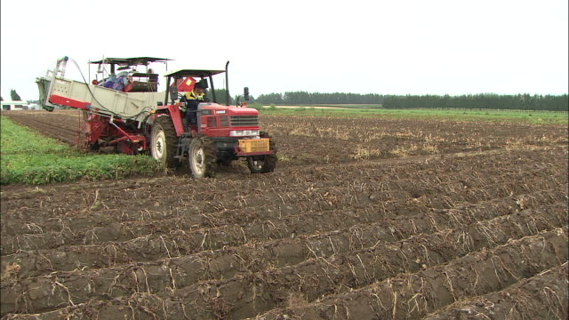a tractor rolls into a potato field. - raw potato stock videos & royalty-free footage