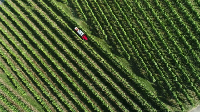 stockvideo's en b-roll-footage met tractor spraying a vineyard, black forrest, germany, europe - tractor