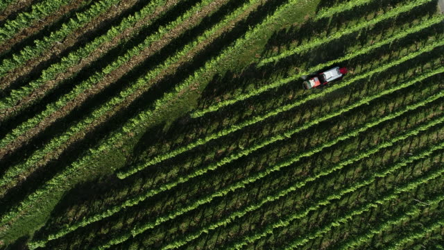 Tractor spraying a vineyard, Black Forrest, Germany, Europe