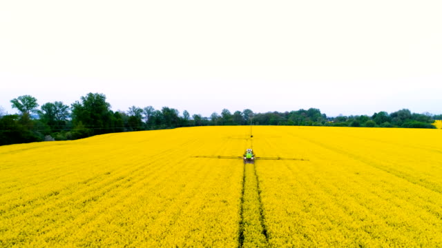 Tractor spraying oilseed rape field. Agriculture background. Aerial view. 4K