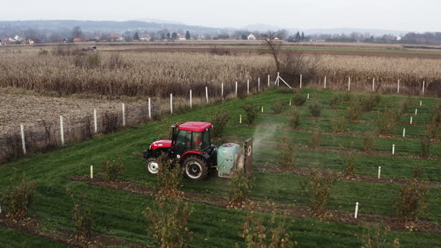 tractor sprays insecticide/herbicide in hazelnut orchard - herbicide stock videos & royalty-free footage