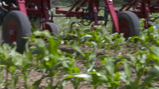 tractor tilling soil between sweetcorn plants in field, uk - swaying stock videos & royalty-free footage