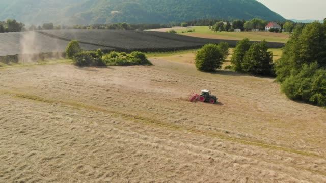 traktor dreht trockenes heu auf dem feld - cereal plant stock-videos und b-roll-filmmaterial