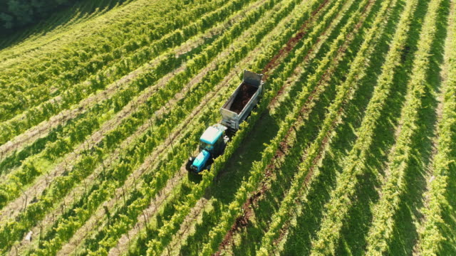 aerial tractor with a trailer driving in a vineyard - prekmurje stock videos & royalty-free footage