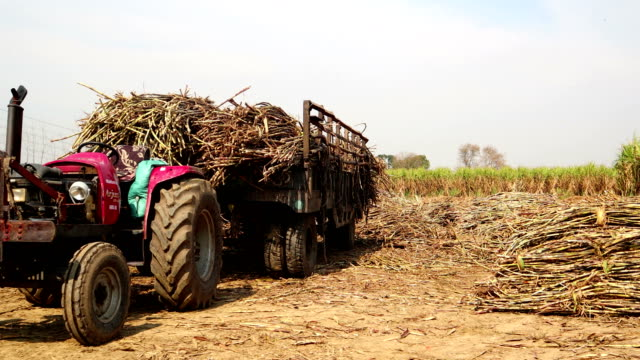 tractor with loaded sugarcane trolley - sugar cane stock videos and b-roll footage