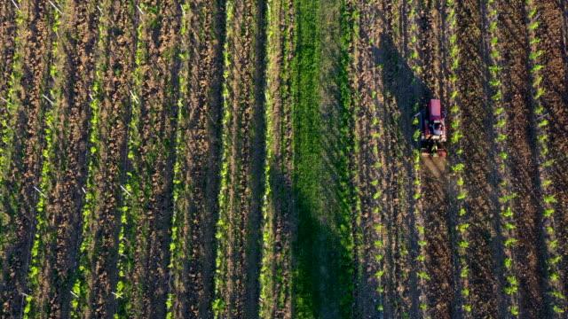 tractor working in a vineyard, tuscany, italy - byggnadskonstruktion bildbanksvideor och videomaterial från bakom kulisserna