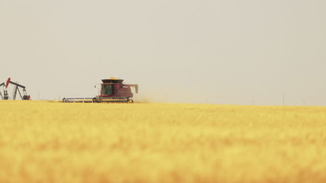 tractor working in wheat field, harvesting season - agricultural equipment stock videos & royalty-free footage
