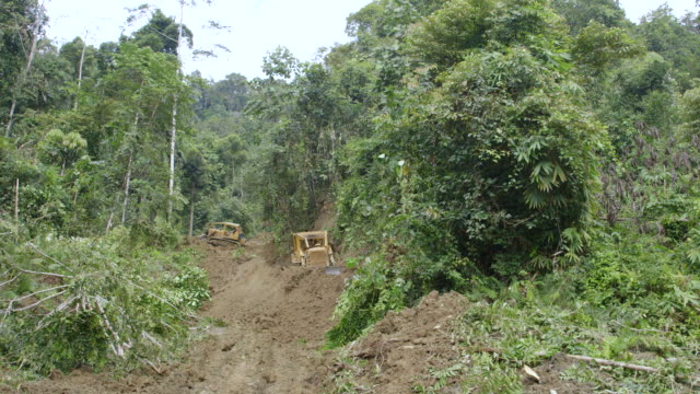 ws tractors clearing forest road for logging / tawau, sabah, malaysia - bulldozer stock-videos und b-roll-filmmaterial