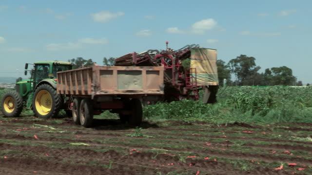 vídeos de stock e filmes b-roll de tractors pikking carots from the field - grupo médio de animais