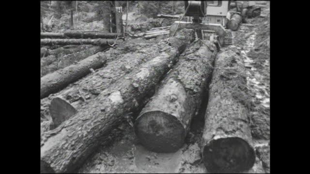 vídeos y material grabado en eventos de stock de tractors pull timber out of a forest. - industria forestal