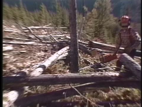 tractor-trailers haul felled logs, and a logger cuts down a pine tree. - lumberjack stock videos & royalty-free footage