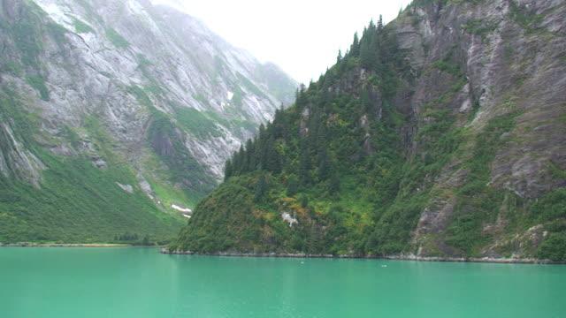 tracy arm fjord - alaska - spruce stock videos & royalty-free footage