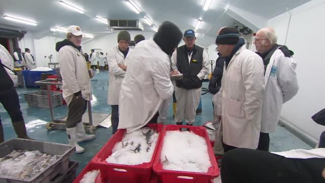 vídeos de stock, filmes e b-roll de traders in fish market selling the days catch in newlyn cornwall - indústria da pesca