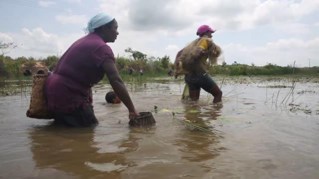 vídeos de stock, filmes e b-roll de traditional afrobrazilian fishing on november 21 2014 in maranhao state brazil - amazonas state brazil