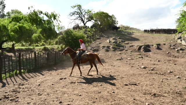 traditional argentinian gaucho on horse chase calf - argentinian culture stock videos & royalty-free footage