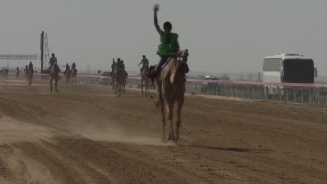 a traditional camel race was organised friday in sweihan united arab emirates as part of the sultan bin zayed al nahyan heritage festival - hooved animal stock videos and b-roll footage