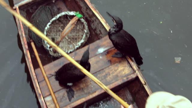 stockvideo's en b-roll-footage met traditional chinese fisherman - cormorant