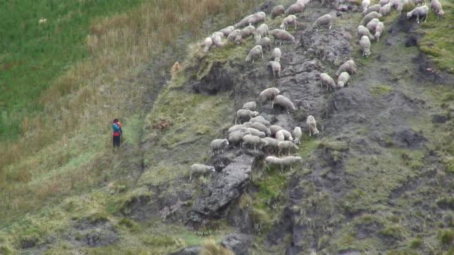 ws ha traditional ecuadorian shepherd with herd of sheep on hillside / quilotoa, ecuador - ecuador stock videos & royalty-free footage