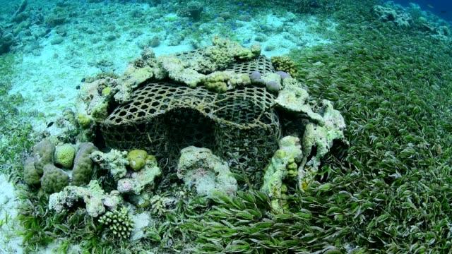 vídeos y material grabado en eventos de stock de traditional fish trap on sea bed in wakatobi national park, indonesia - esponja