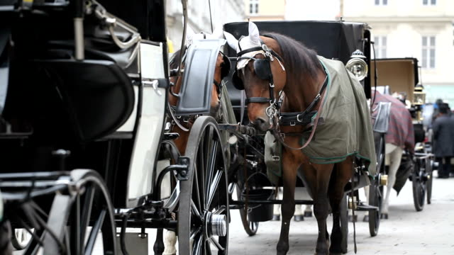 traditional horsedrawn of vienna, austria - horsedrawn stock videos & royalty-free footage