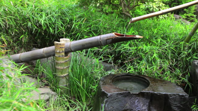 traditional japanese bamboo fountain - bamboo plant stock videos and b-roll footage