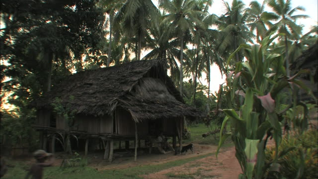 a traditional jungle village home sits on stilts. - strohdach stock-videos und b-roll-filmmaterial
