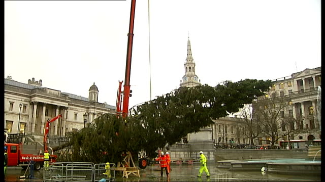 vídeos de stock e filmes b-roll de trafalgar square christmas tree felled in norway and erected in england; england: london; ext/night various views of lorry with tree on back arriving... - baixar