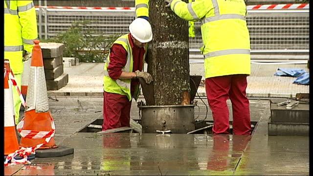 trafalgar square christmas tree for 2012 arrives; england: london: trafalgar square: ext / dusk norwegian spruce christmas tree for 2012 being... - pinaceae stock videos & royalty-free footage