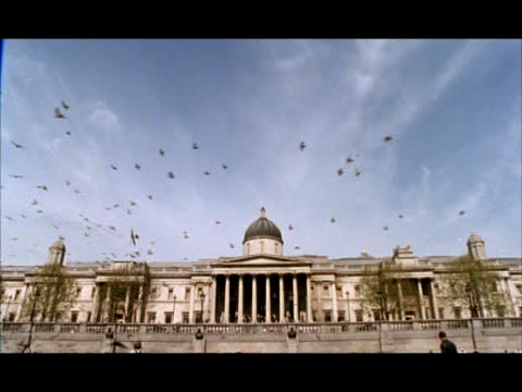 wa trafalgar square, tilt up to sky as flock of birds fly across, london, england - 合意点の映像素材/bロール