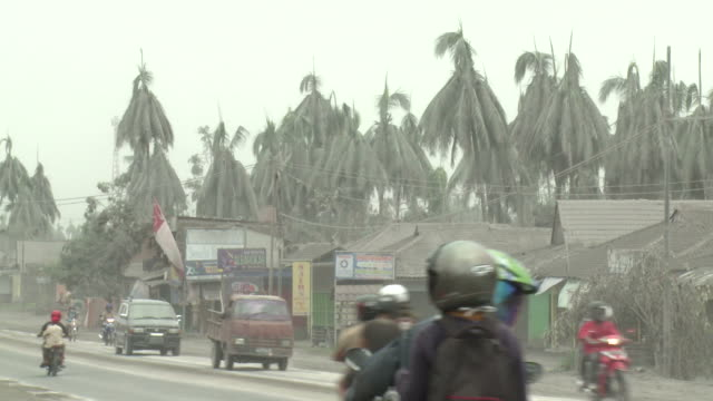 Traffic drives on highway lined with damaged trees from ash fallout from Merapi volcano eruption; Indonesia. 7 November 2010 / AUDIO