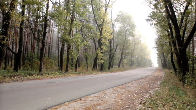 traffic of cars at the forest road. - dirt track stock videos and b-roll footage