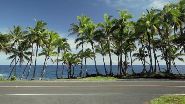 t/l ws traffic on coastal road with coconut trees / opihikao, hawaii, usa - ハワイ島点の映像素材/bロール