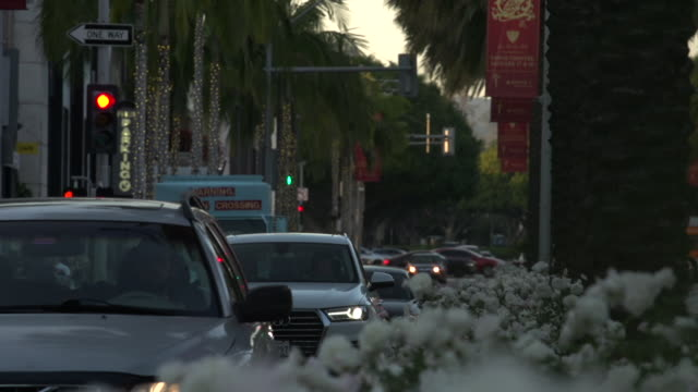 traffic on rodeo drive from santa monica blvd at golden hour through flowers on the traffic divider in the foreground, beverly hills - santa monica blvd stock videos & royalty-free footage