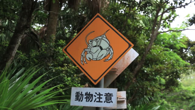 ms traffic sign of coenobita, endemism of ogasawara islands and natural monument / ogasawara islands, tokyo, japan - segnaletica stradale video stock e b–roll