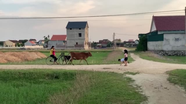 trafficking networks reach deep into remote communities in central vietnam and in ha tinh province villagers say the recent deaths of 39 migrants in... - north vietnam stock videos & royalty-free footage