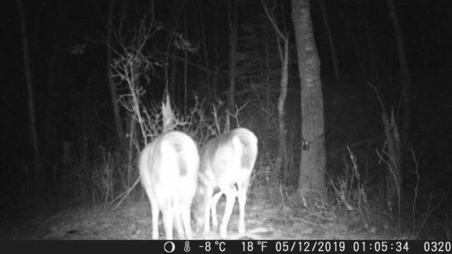 trail camera night footage of deer - white tailed deer stock videos & royalty-free footage